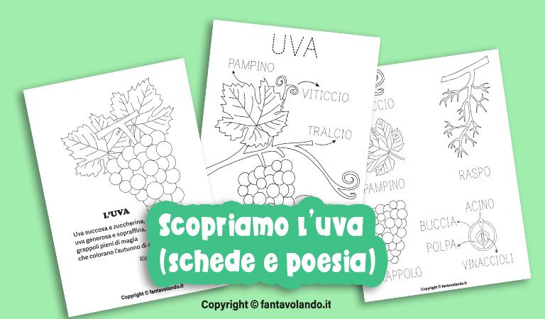 Estremamente Autunno: scopriamo l'uva (schede e poesia) - Fantavolando OM12