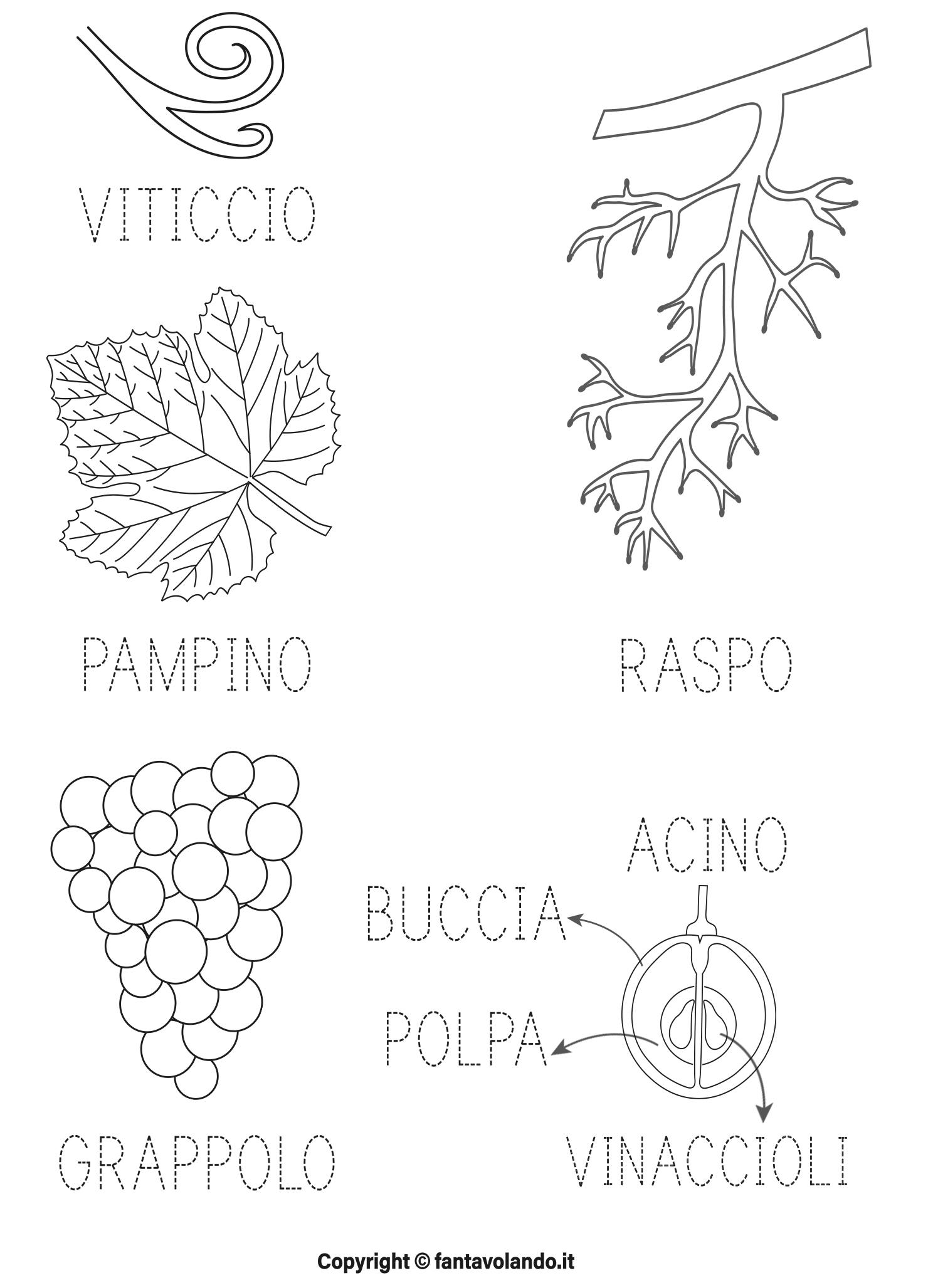 Conosciuto Autunno: scopriamo l'uva (schede e poesia) - Fantavolando CW23